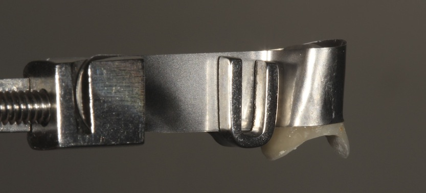 IMG 4438